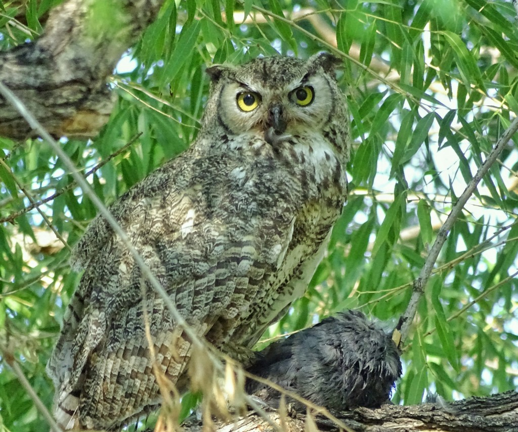 Here we want focus on the owl, and on its eyes in particular. Multi-point focus would likely have focused on the branch in front of the owl.