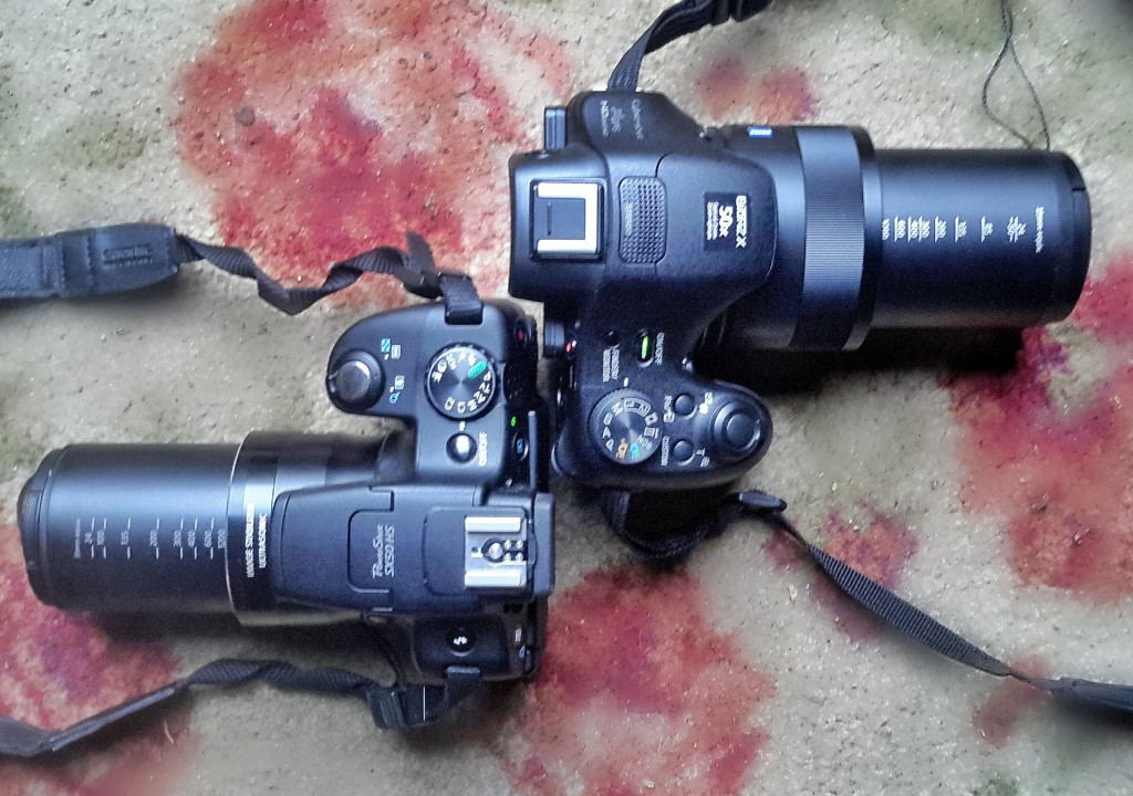 Canon SX50HS and Sony HX400V in Bird and Wildlife Mode