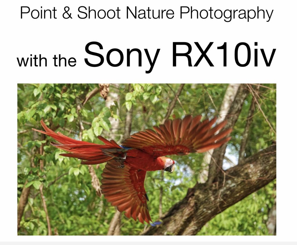Sony RX10iv for Point and Shoot Nature Photography Guide